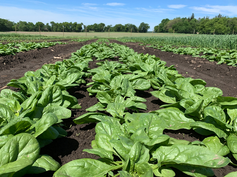 Farm Share Week 1 Newsletter