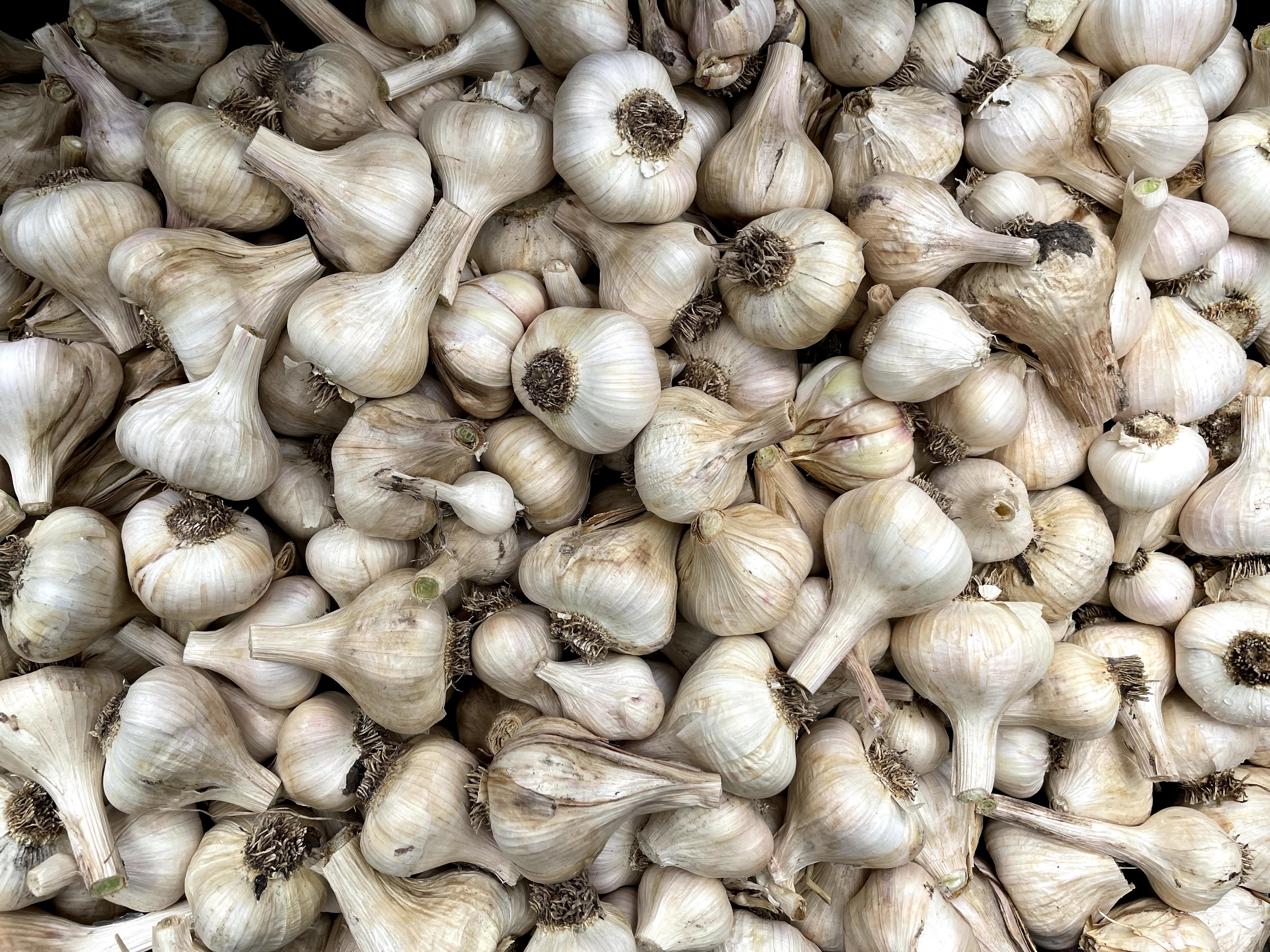 Garlic!!