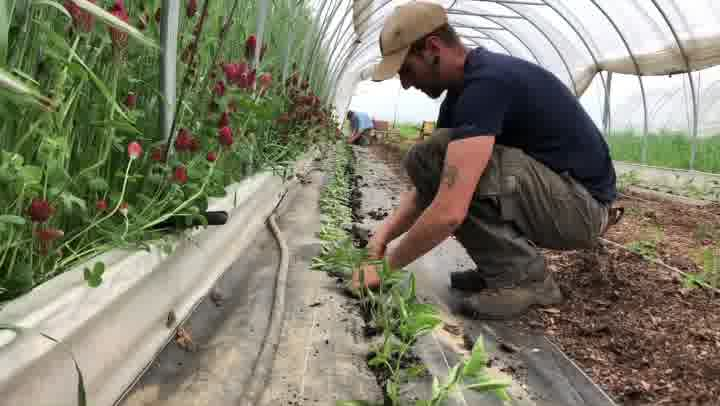 Field Notes: Planting Tomatoes and Peppers