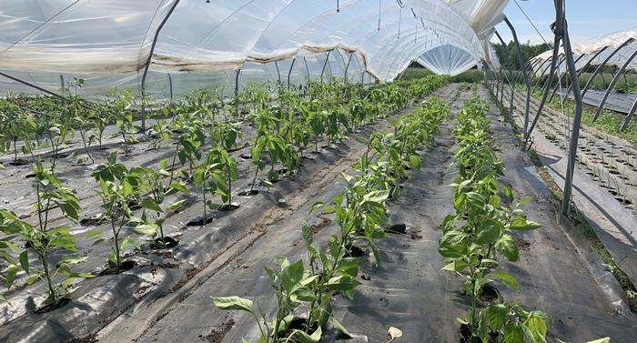 Farm Happenings for June 13th, 2020