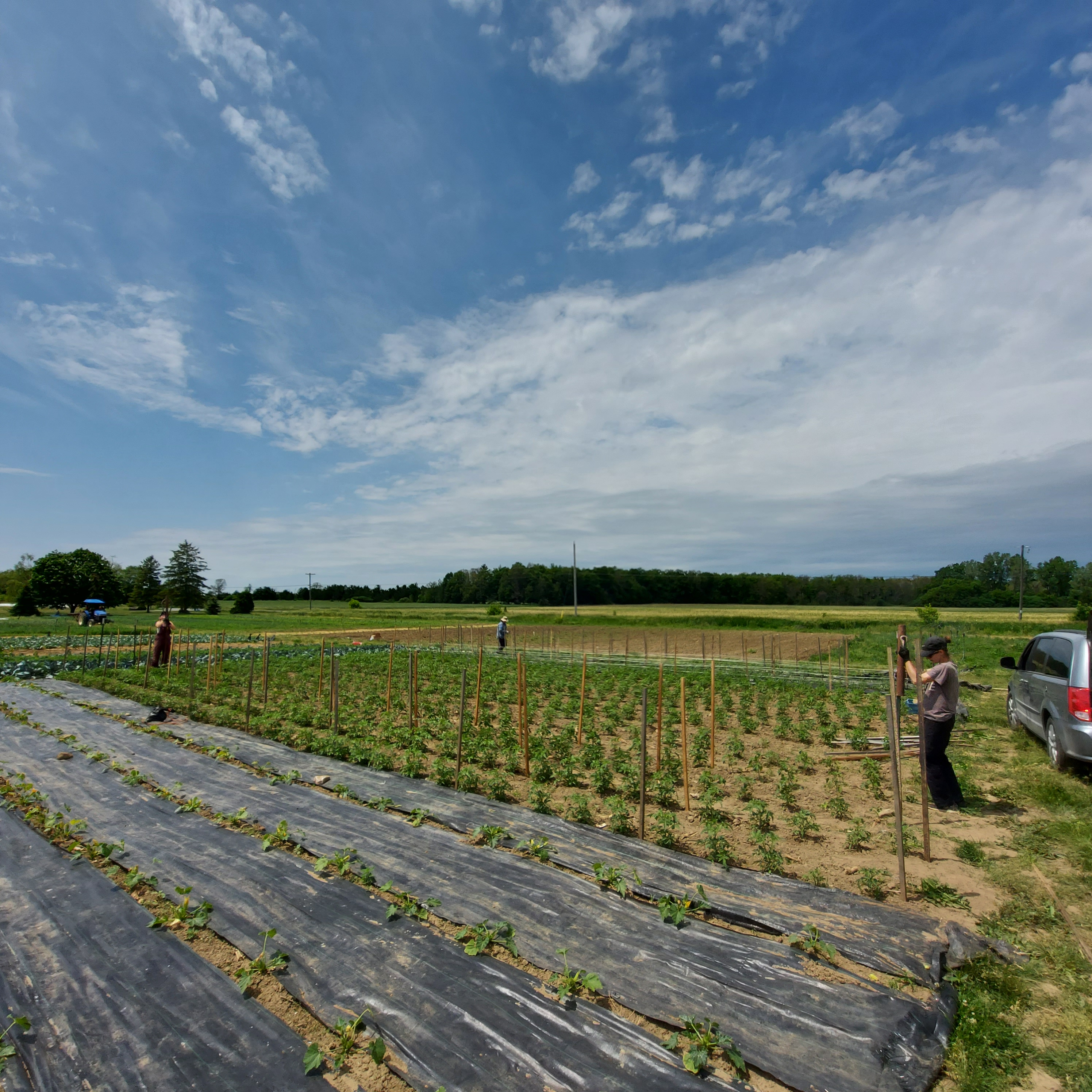 Farm Happenings for June 17, 2021
