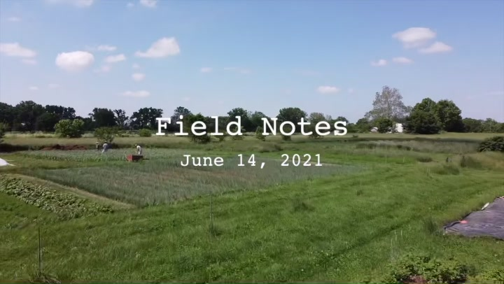 Field Notes: Cover Crops
