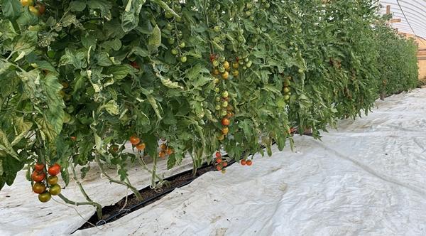 Farm Happenings for June 20-26, 2020
