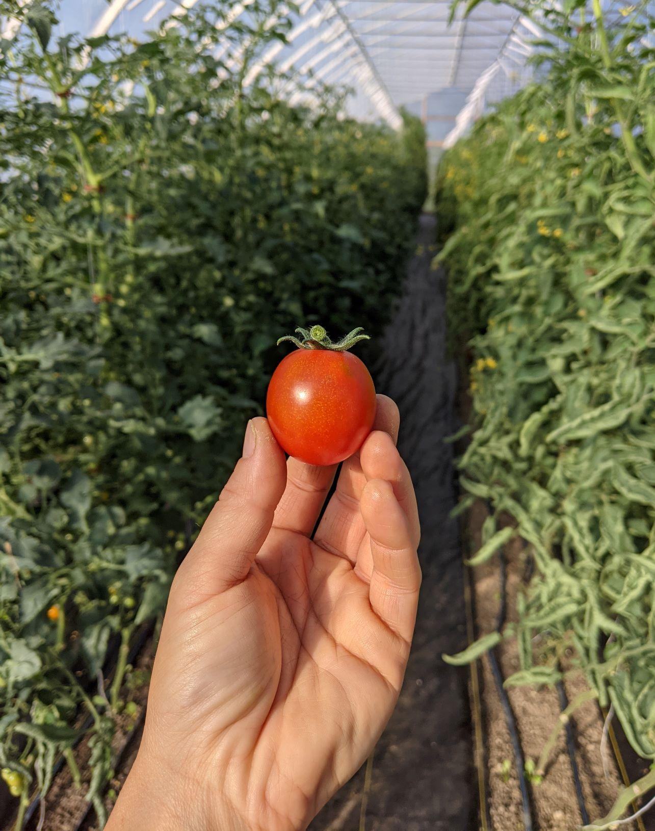 Farm Share - week of July 12