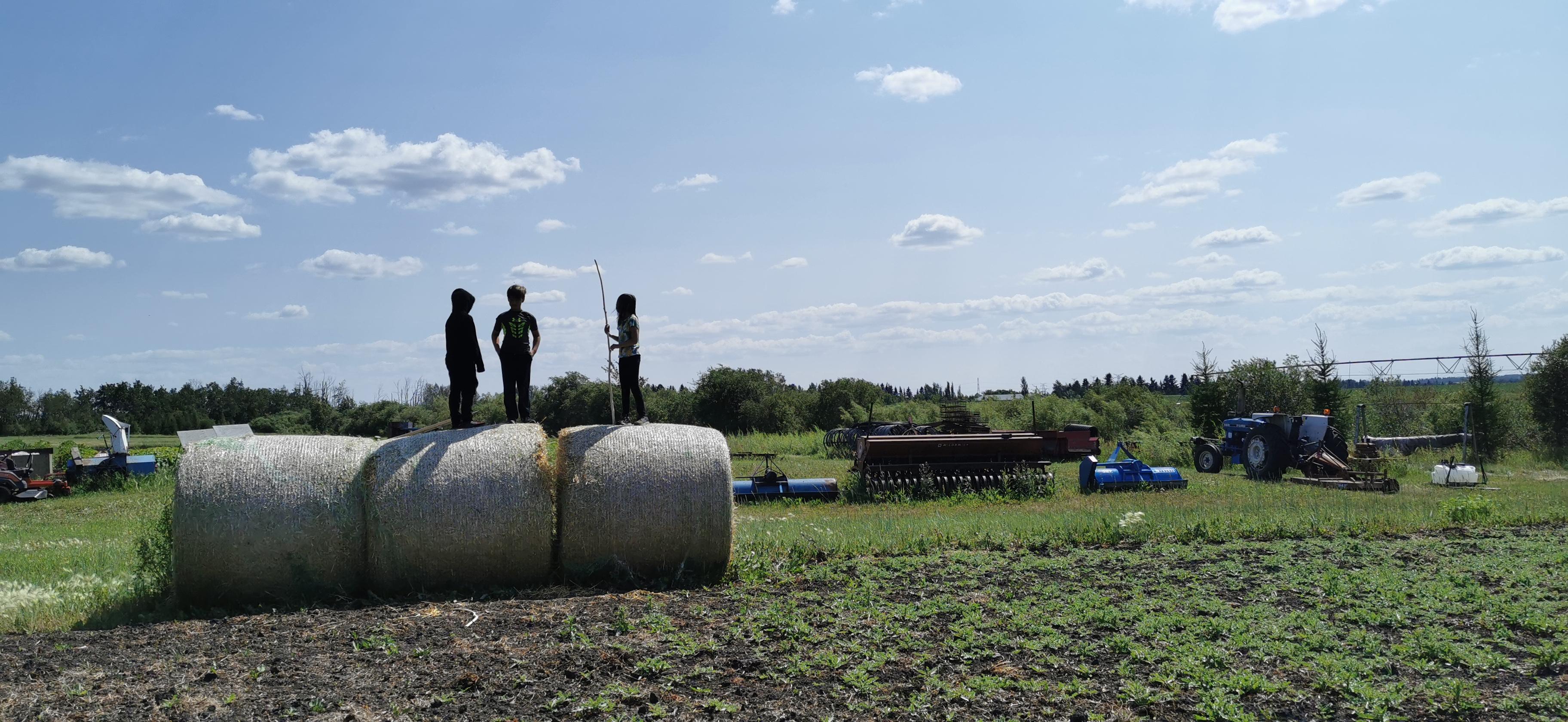 Farm Happenings for Week 2 of 12