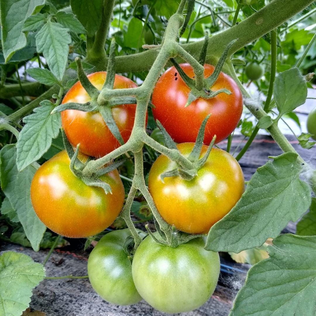 Farm Happenings for Summer 6