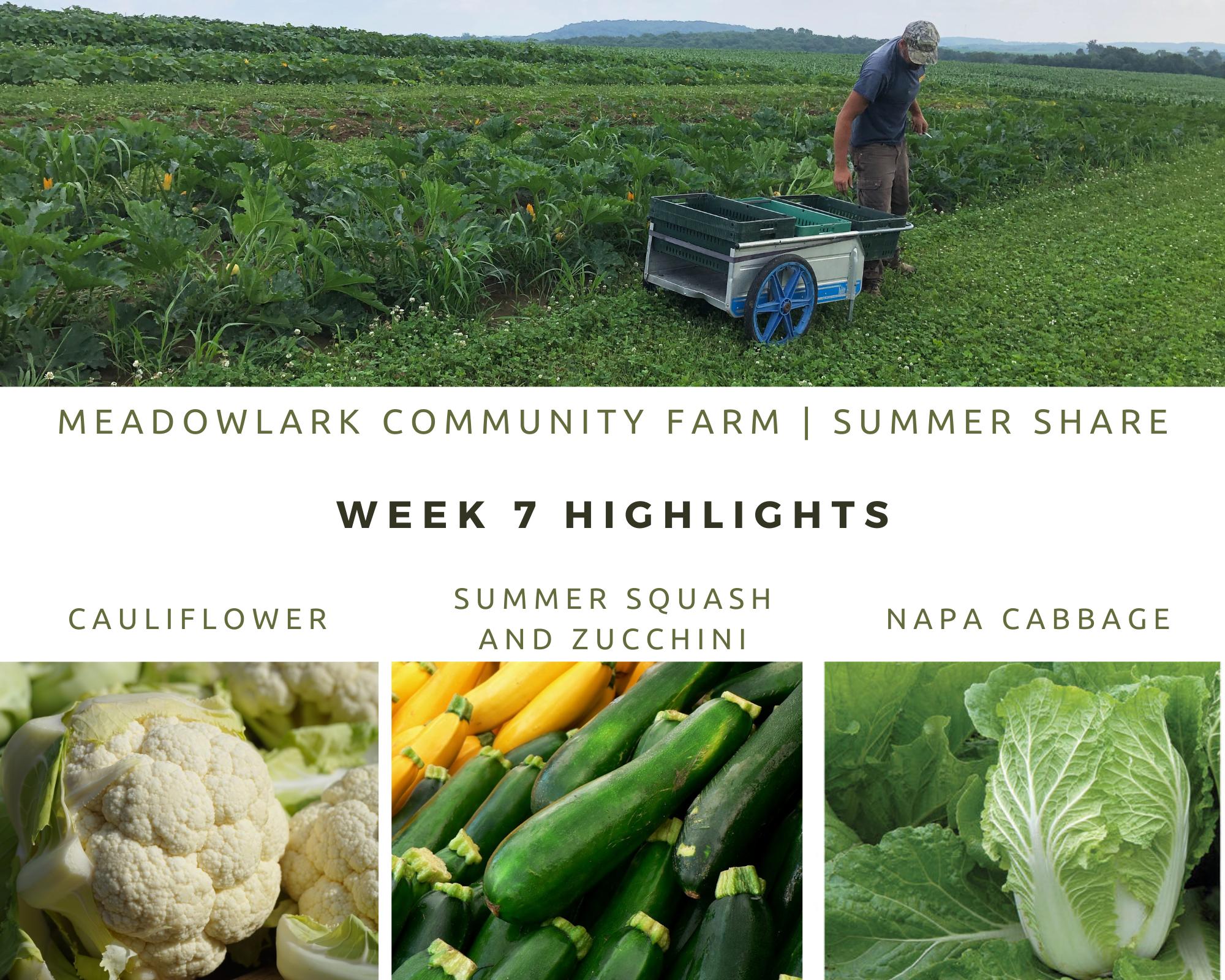 Summer Share: Week 7