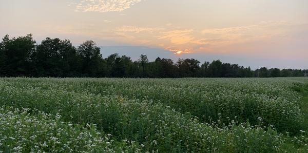 Farm Happenings for July 18-24, 2021