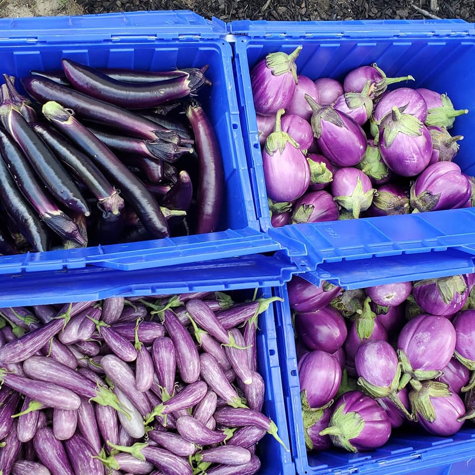Special Notes about Eggplant!