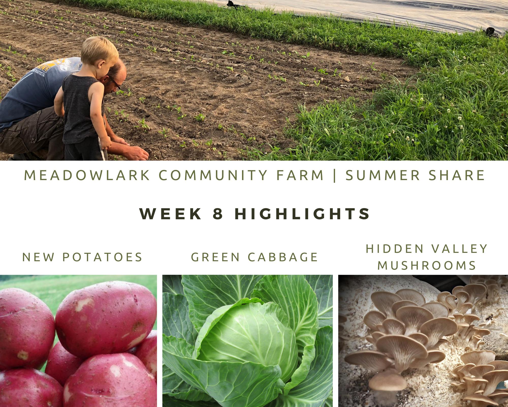 Summer Share: Week 8
