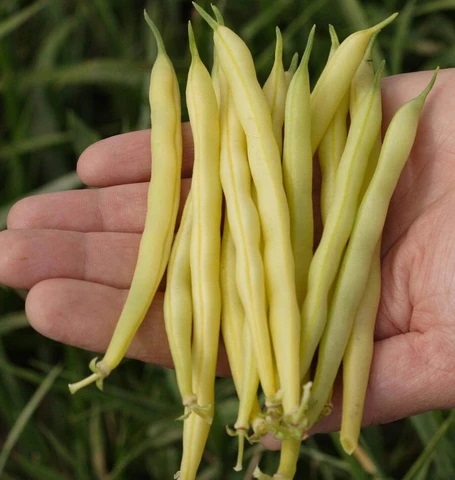 Bean there done that - Farm Happenings for July 27, 2021