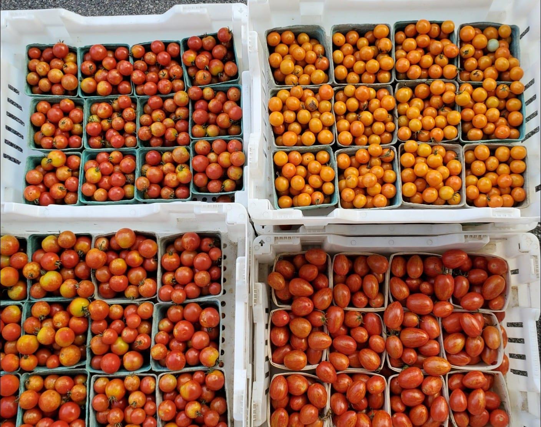 Storing Produce Properly, plus amazing Extras