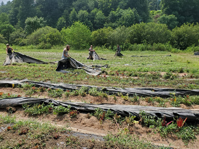 Farm Happenings for August 3, 2021