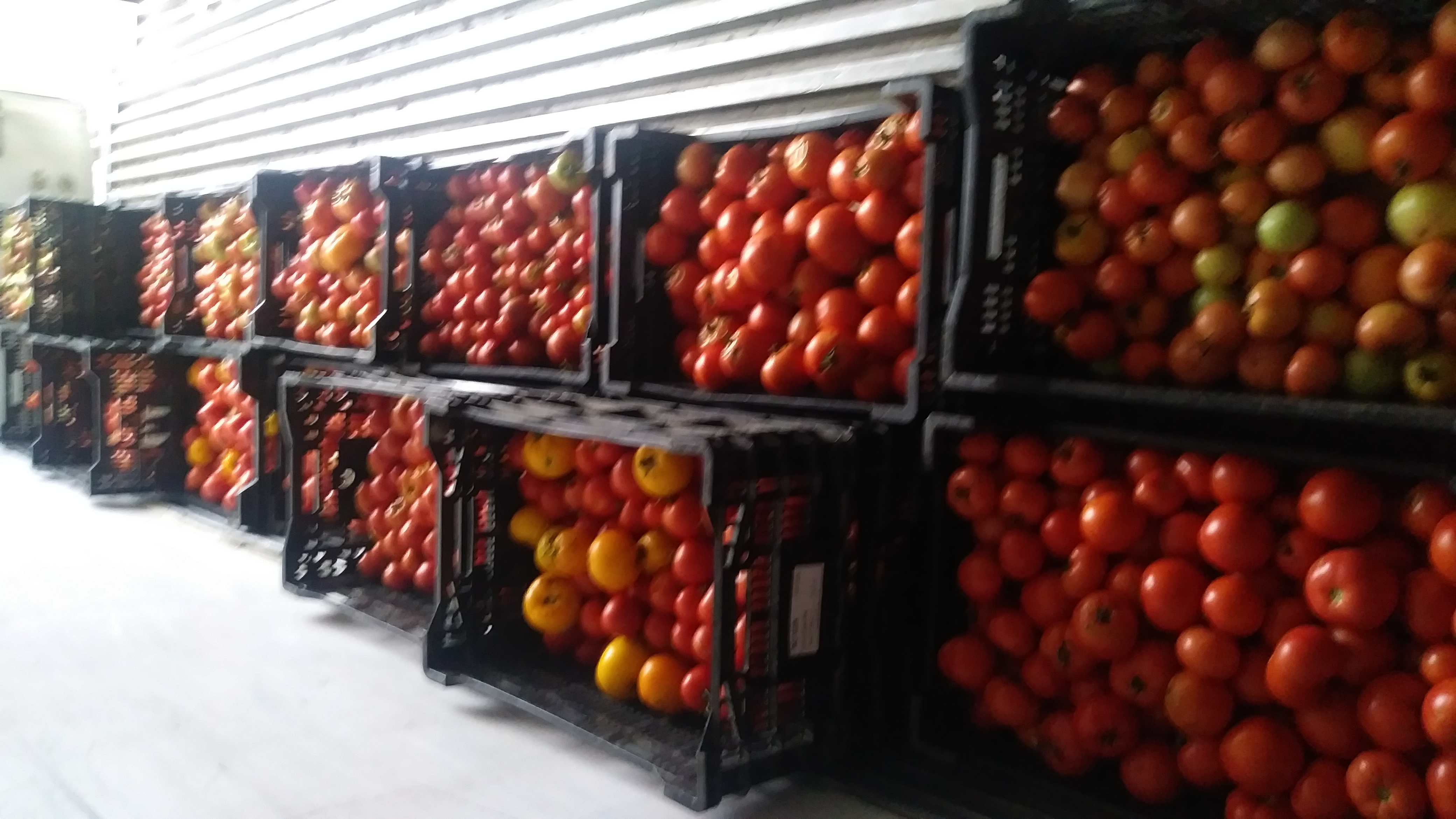 Farm Happenings for August 31, 2021 - The story of  La Tomatina