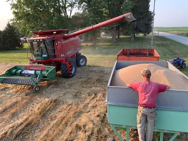 Jack on our Winter Wheat Harvest + Flour in Winter CSA Shares!