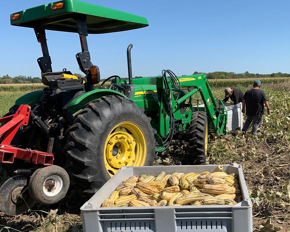 Farm Share Week 16 Newsletter