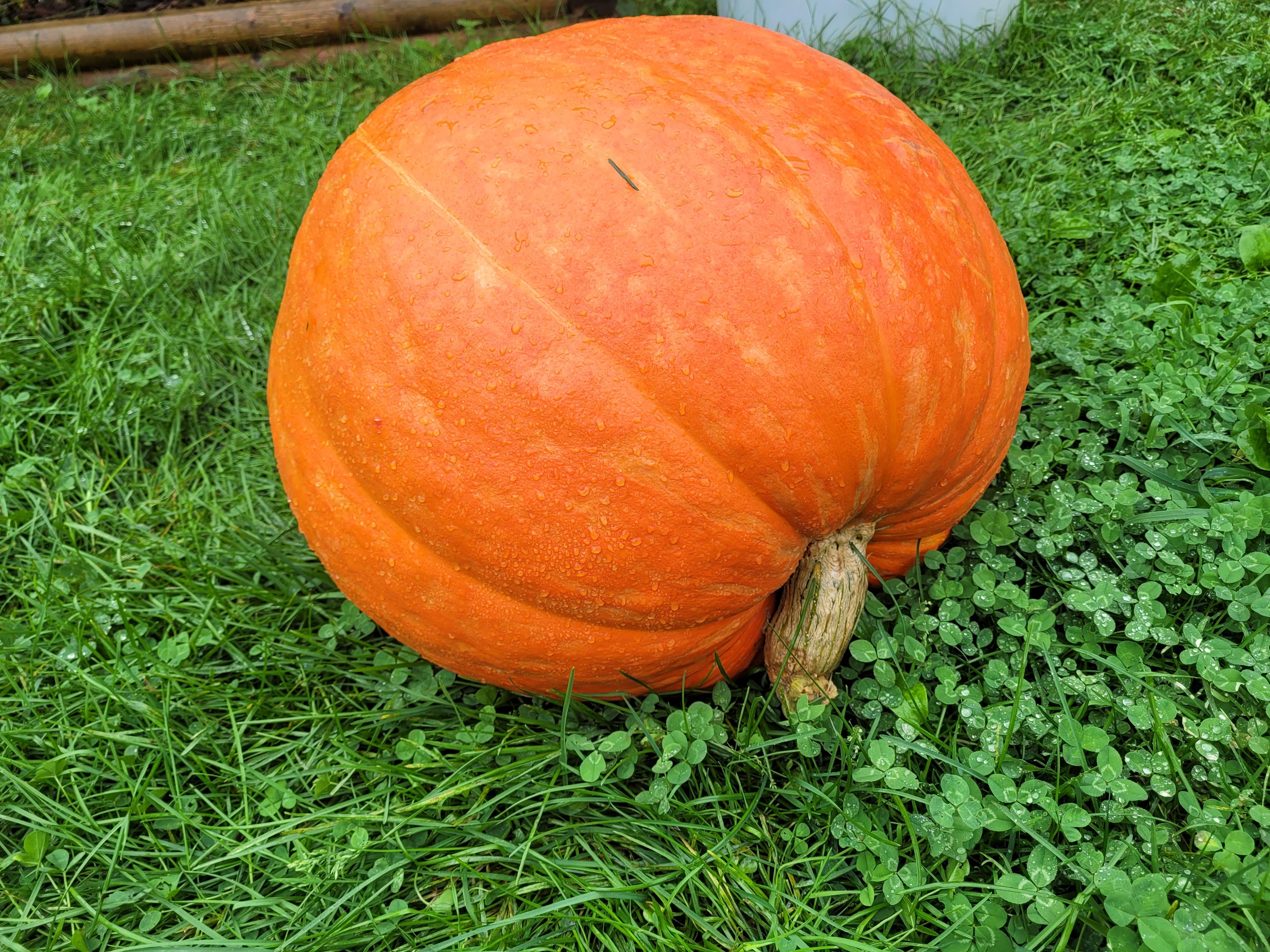 Farm Happenings forthe week of September 28, 2021