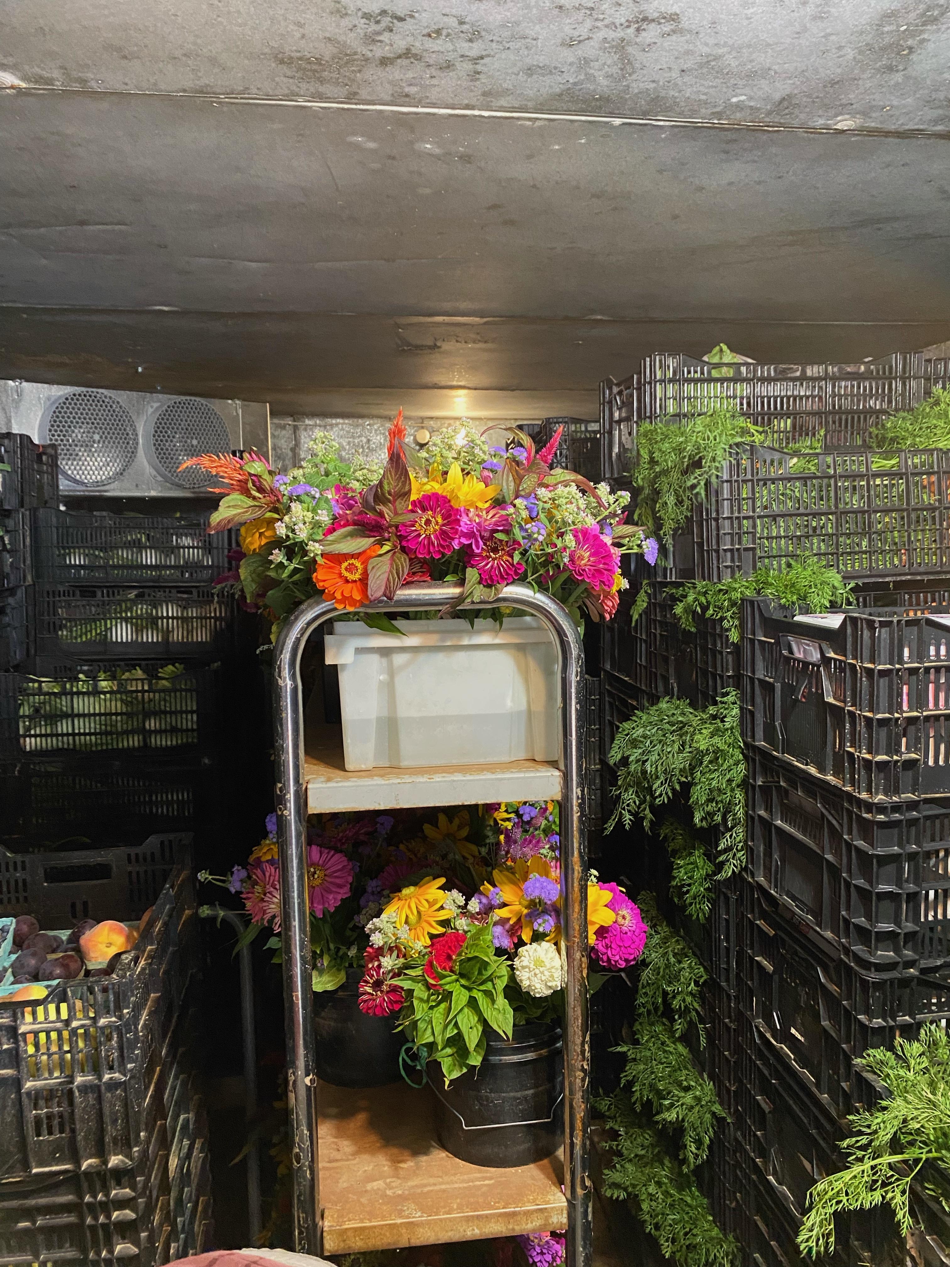 Autumn Week 4: Storing Vegetables