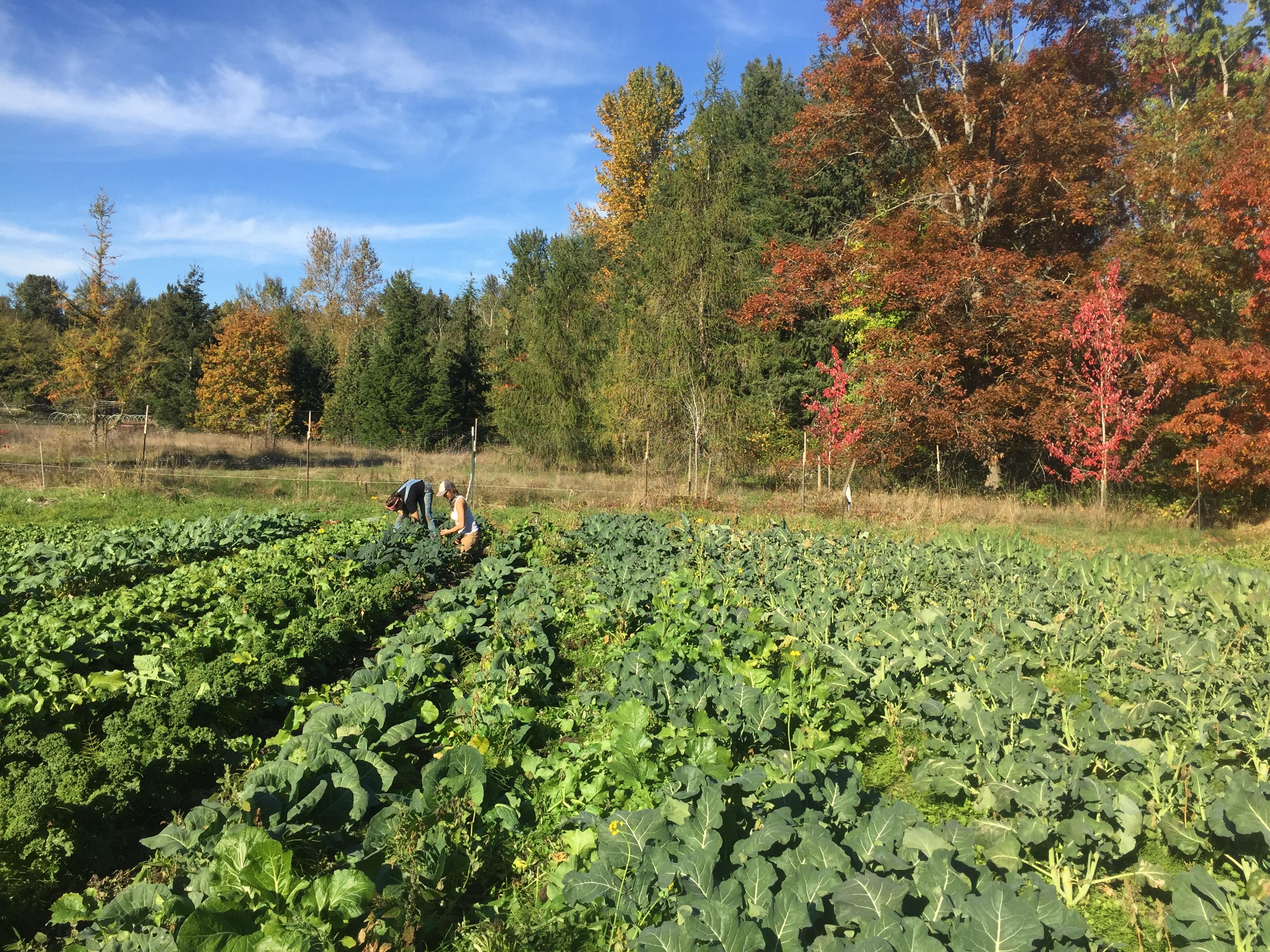 Farm Happenings for October 20, 2021