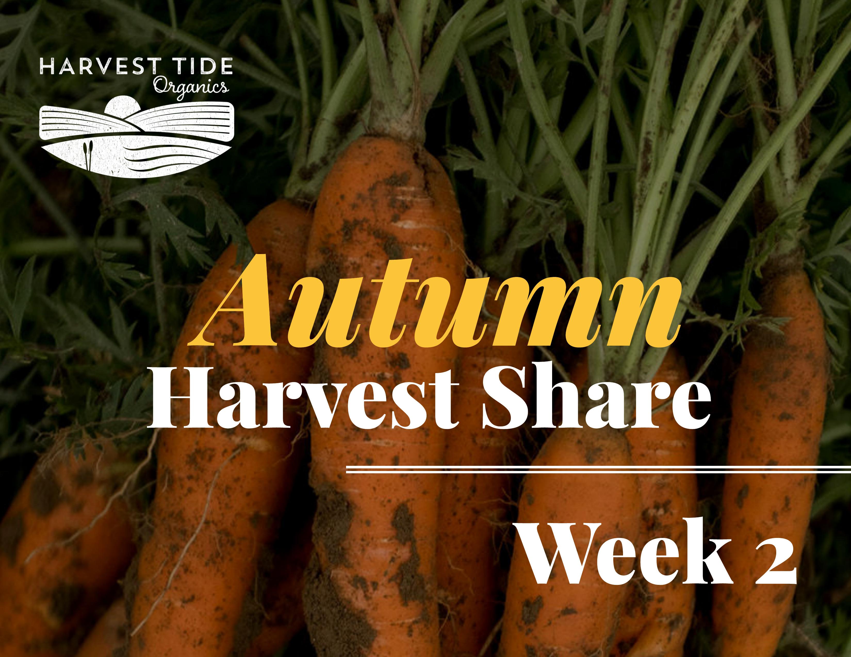 Autumn Harvest Share - Week 2