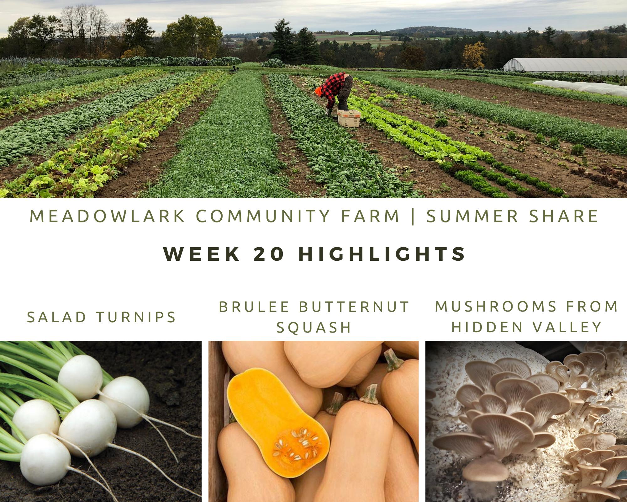 Summer Share: Week 20