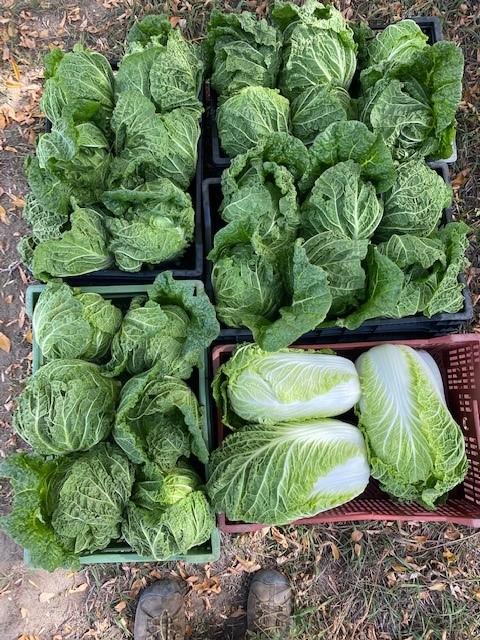 Farm Happenings Week 21 CSA 2021