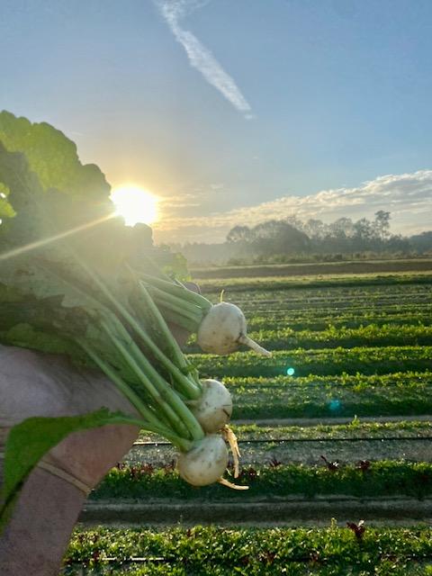 Farm Happenings for October 23, 2021