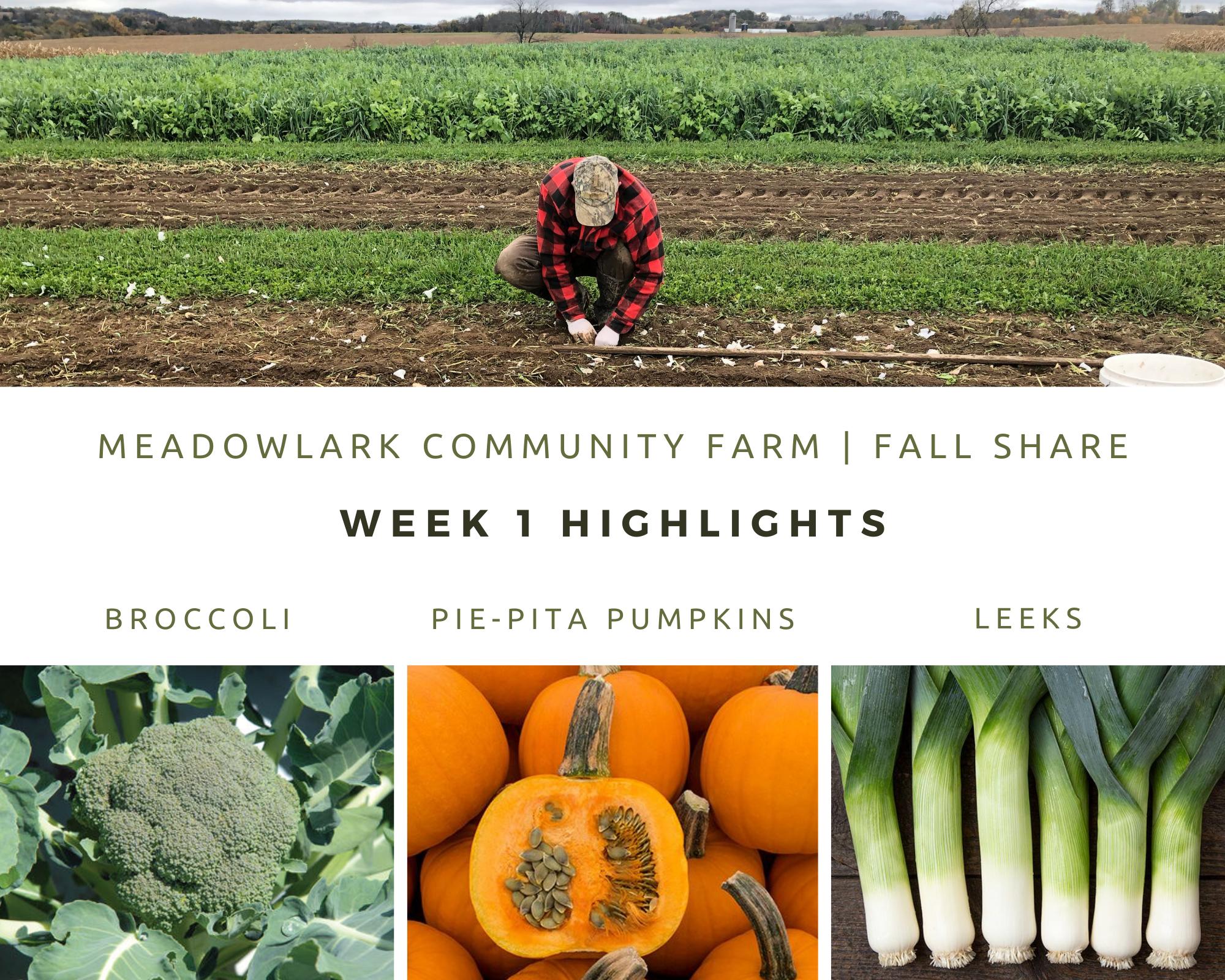 Fall Share: Week 1