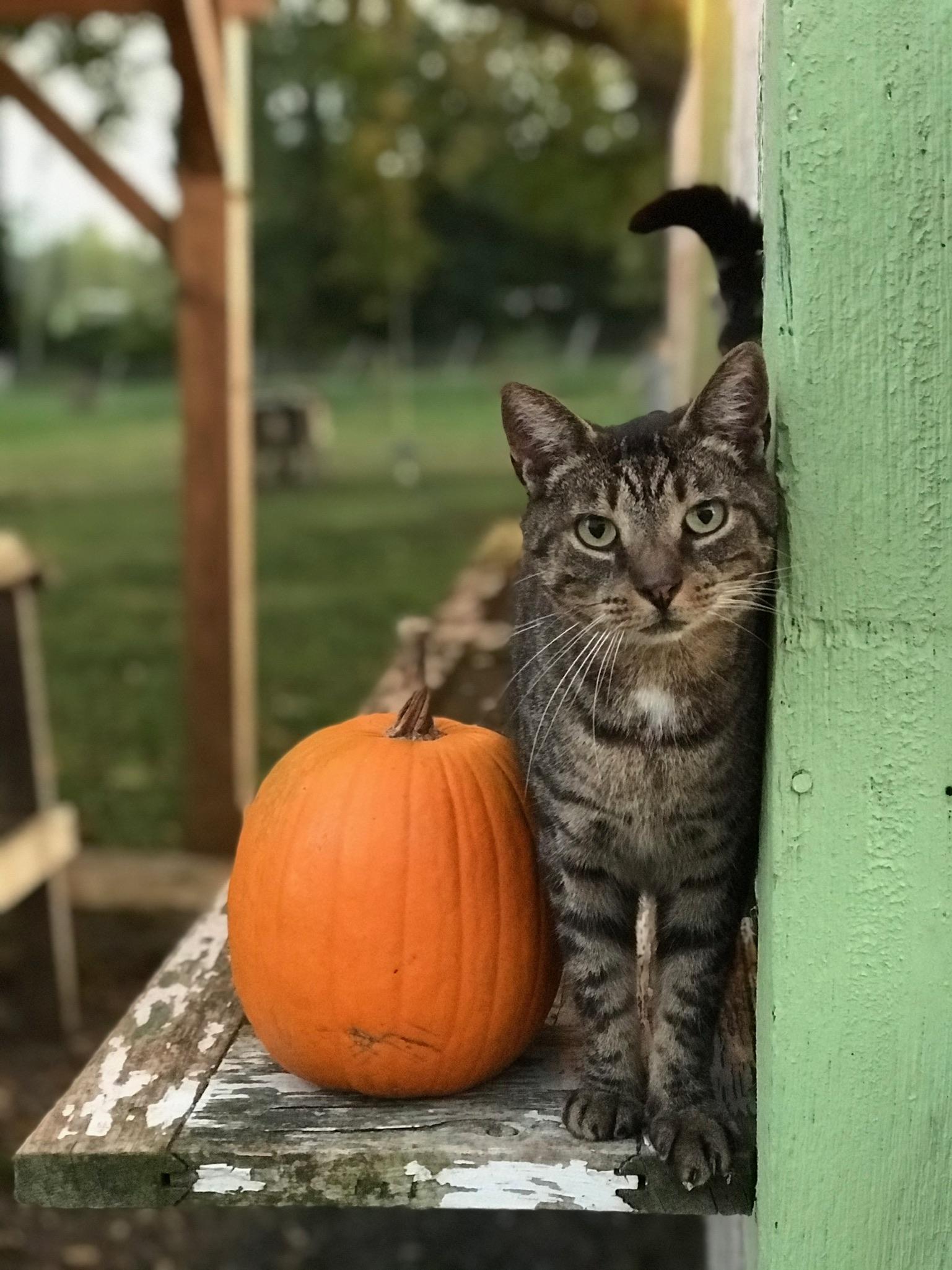 Farm Happenings for October 29, 2021