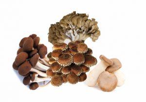 Maine Grown Mushrooms - 7oz