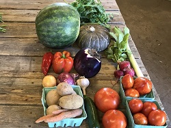 Summer Veggie Share