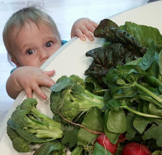 LFUCG Veggie Share - Extra Large