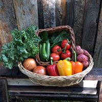 Couples Summer Vegetable Share
