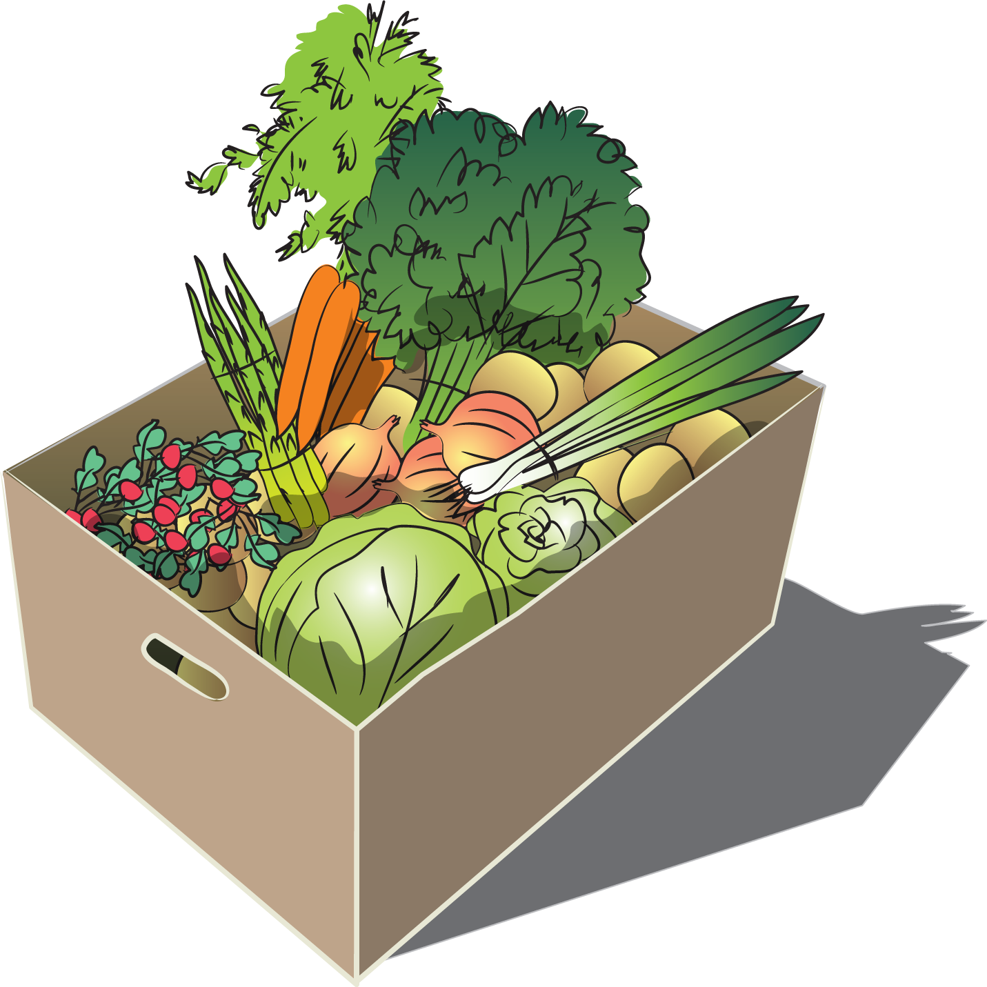 Regular Summer Vegetable Share