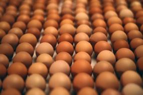 Egg Share: Egg Share