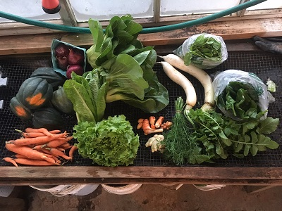 Fall and Winter Vegetable Share - Half Size