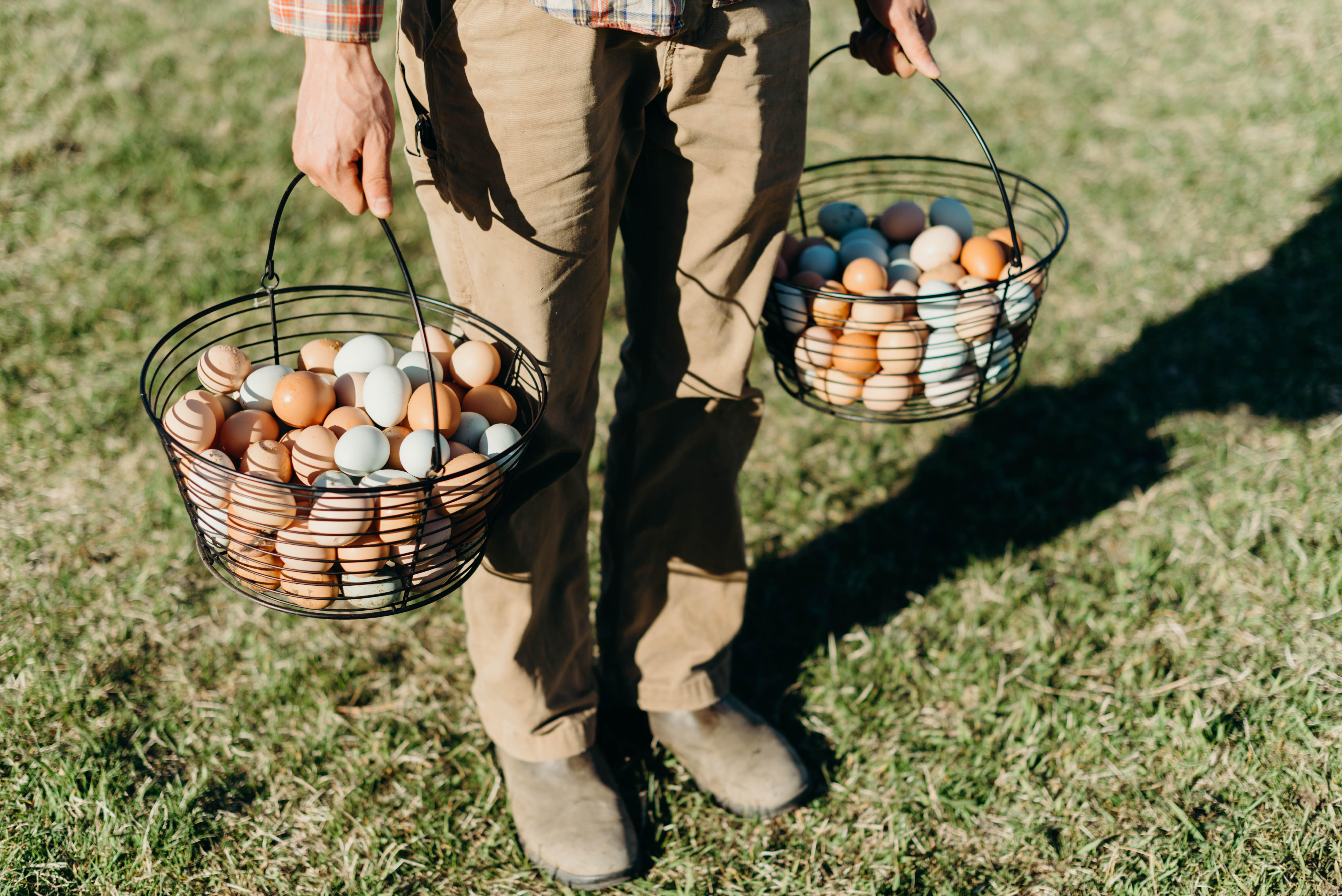 Winter Eggs - One dozen