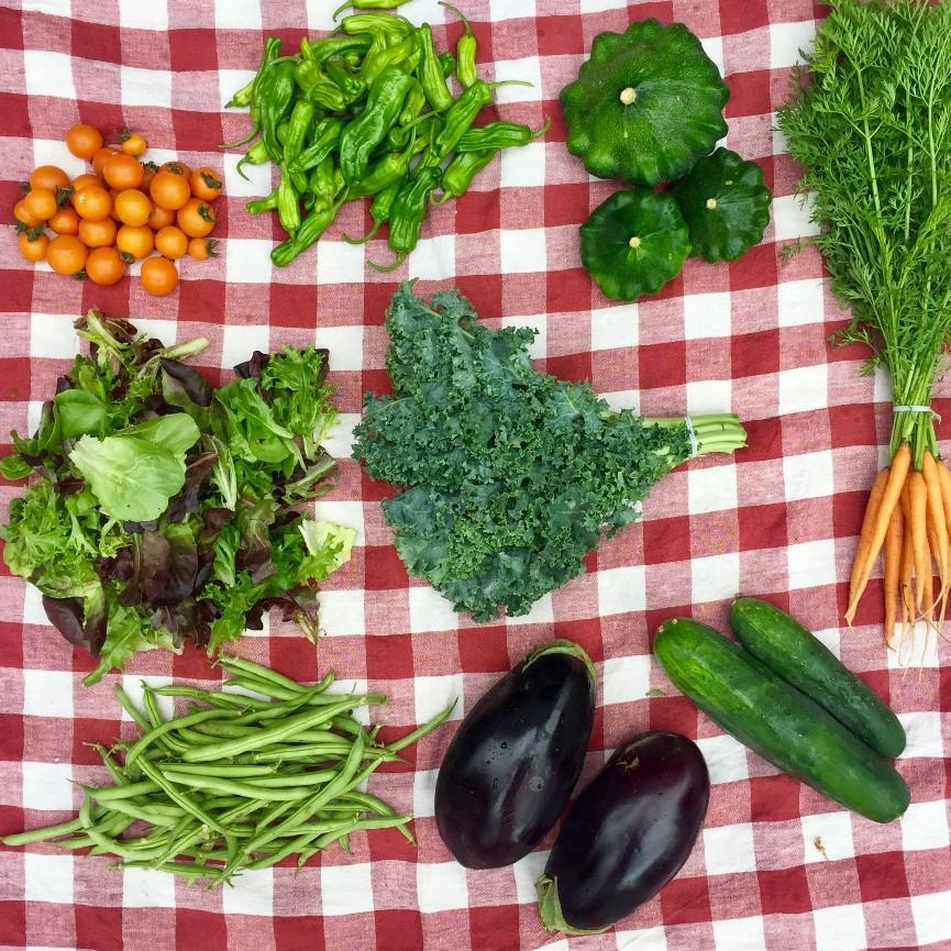 Regular Vegetable Share