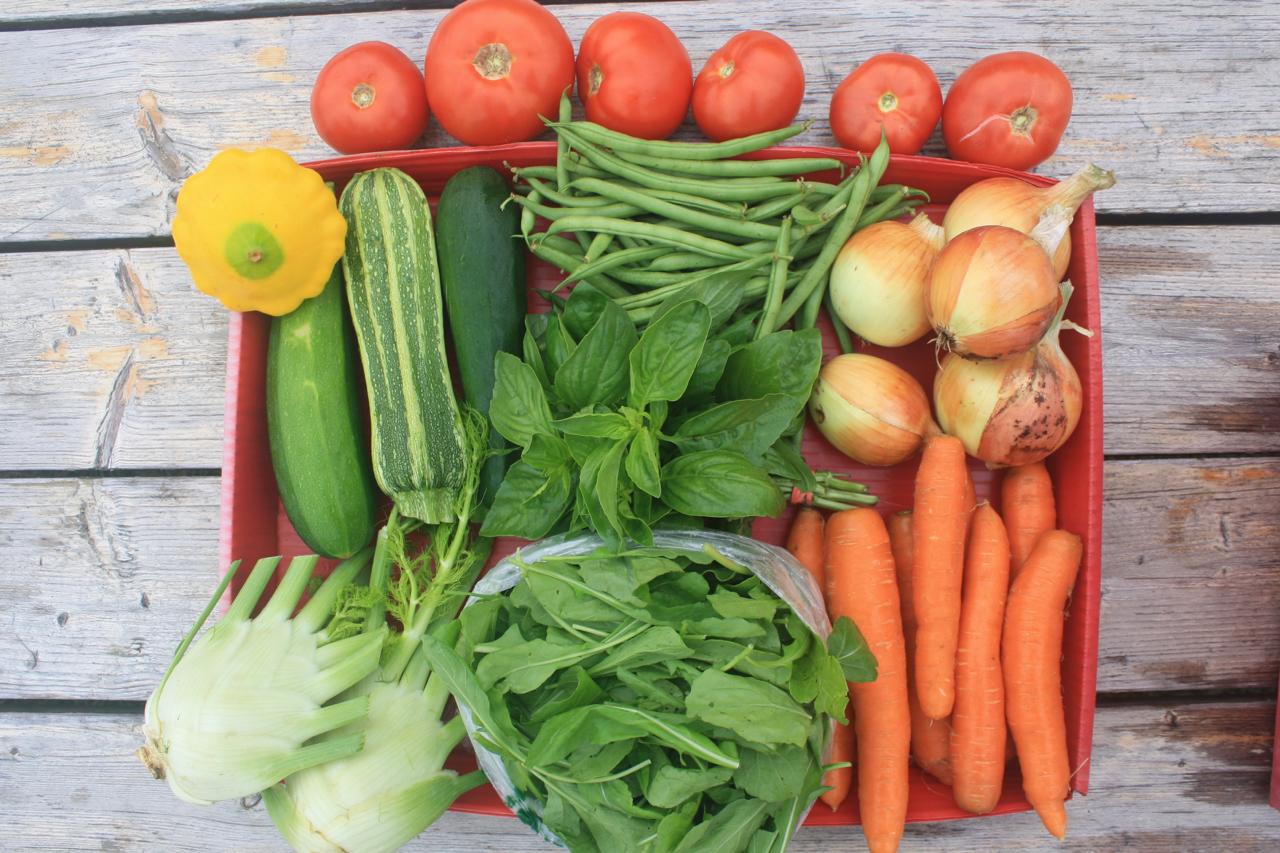 Organic Vegetable Main Season Share