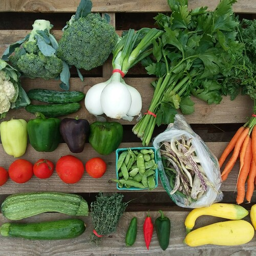 Bi-weekly Half Summer Vegetable Share