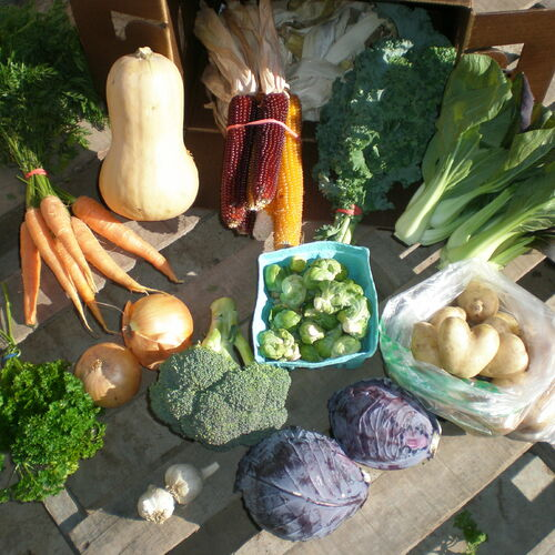 Weekly Full Fall Vegetable Share
