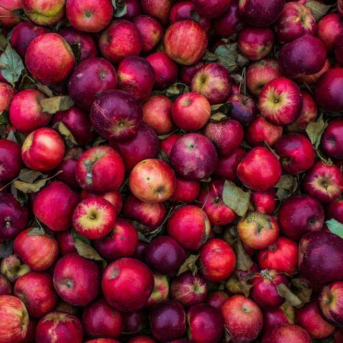 Bi-weekly Fruit Share