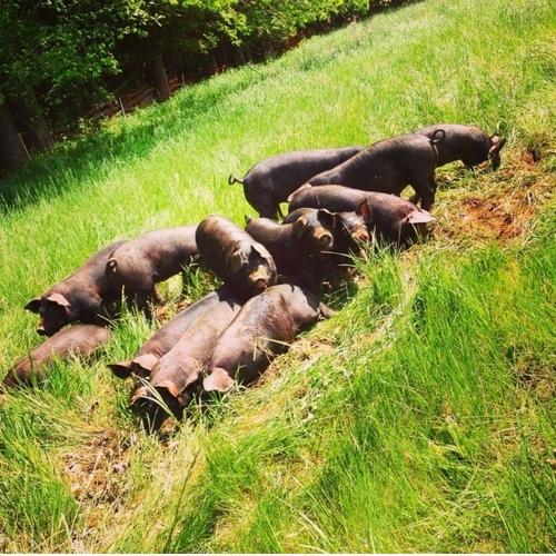 Bag of Berkshire Pork Share