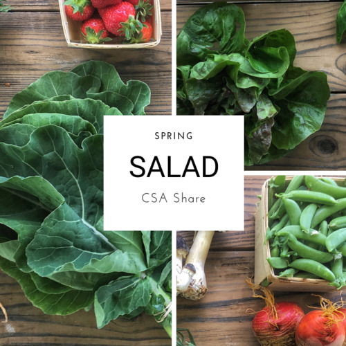 Spring Vegetable Share - Salad Size