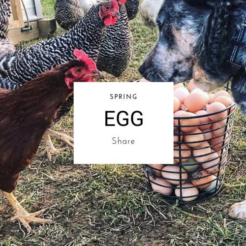 Spring Egg Share