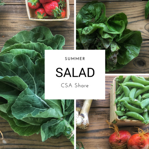 Summer Vegetable Share - Salad Size