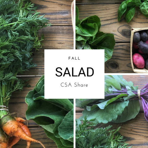 Fall Vegetable Share - Salad Size