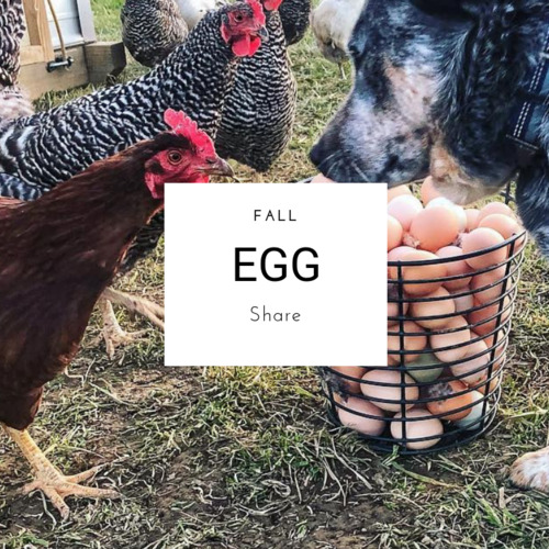 Fall Egg Share