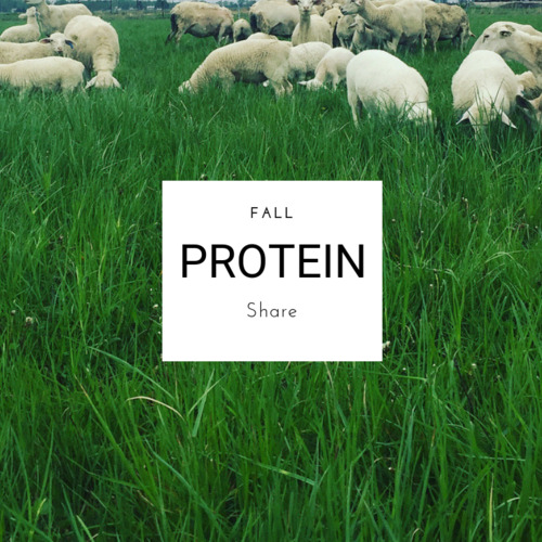 Fall Protein Share - Full Size