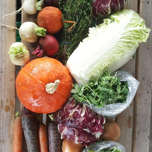 Vegetable Share: Local 25 Share